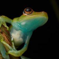 Frog+1