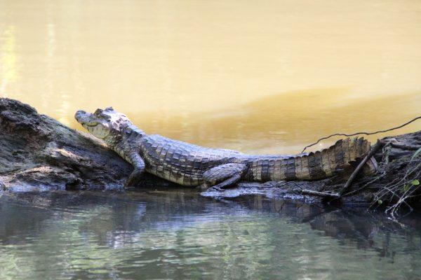 reptile-1050757_1280