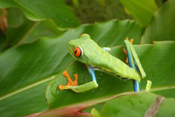 CR.Frog.Jake